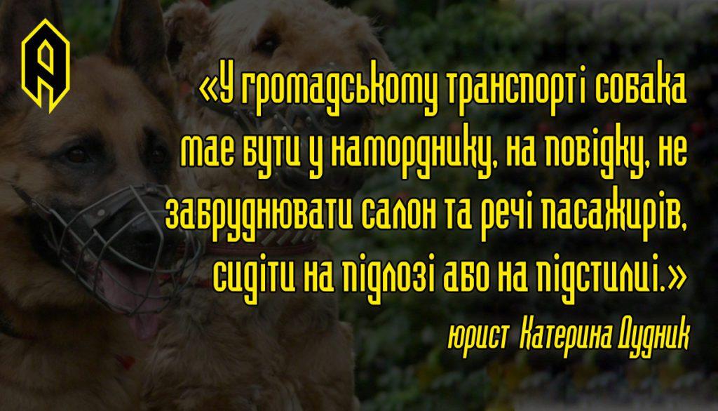 Перевезення тварин, Артіус, тварини у тролейбусі, в тролейбус з собакою